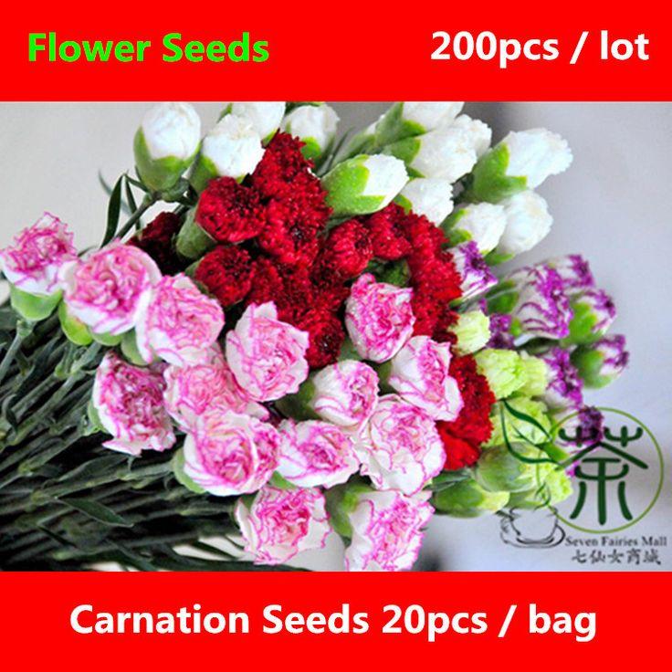 Широко Культивируется Гвоздика Семена Для Посадки 200 шт., украшая Многолетнее Семена цветов, гвоздики Гвоздика Caryophyllus Семена