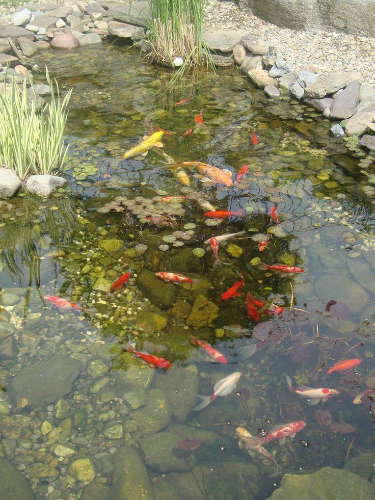 Beautiful Koi Pond | Garden fish ponds | Pinterest