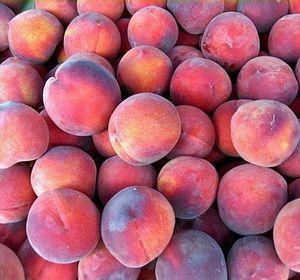 Prunus persica 'Dneprovski', Persikoträd. Ukrainsk sort.  Medelstor söt och saftig frukt.  Mognar i början på augusti.  Zon II?