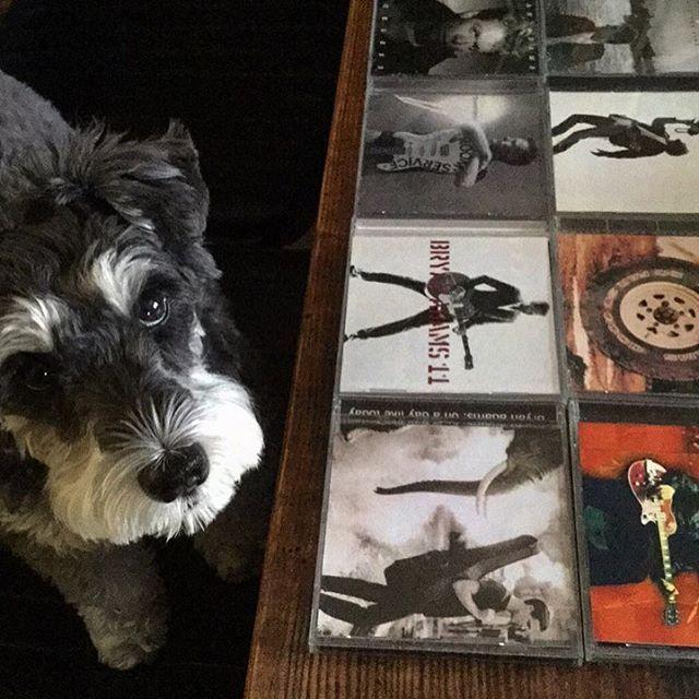 【 犬と音楽 】 dog and music / Bryan lover  Someday I'll be 1 goin' on 15 ‼︎ 1 til l die … alright. by Ziggy  55歳でも18歳のハート。 有言実行のブライアン。 ジギーは 15歳になっても きっと1歳のハート。 ワンコ達は生涯  純粋無垢です。 瞳がやっぱり 物語ってる。  #artist#dog#doglover#dogandmusic#schnauzer#bryanadams#9cue#愛犬#シュナウザー#音楽#ブライアンアダムス
