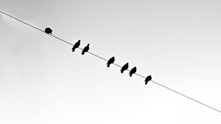 pigeons on line