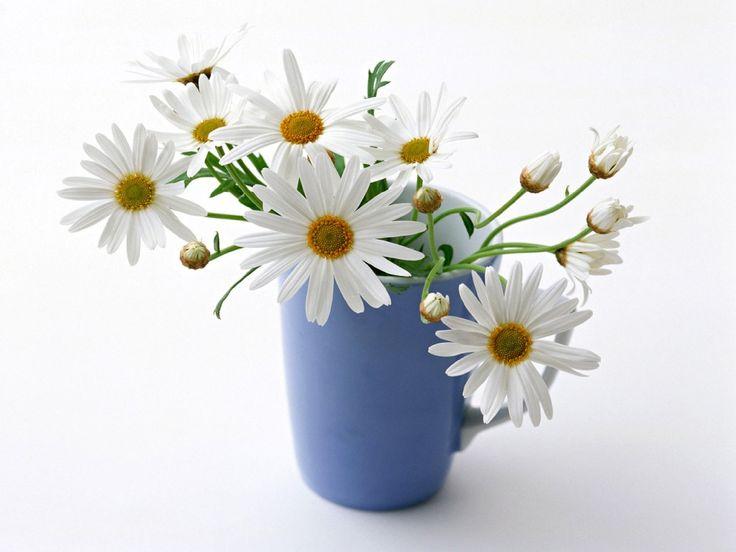 Fondo de pantalla Flores en jarra.jpg