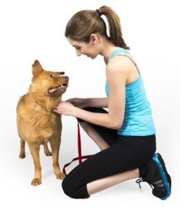 AZ Dog Smart Academy | School for dog trainers | Become a dog trainer