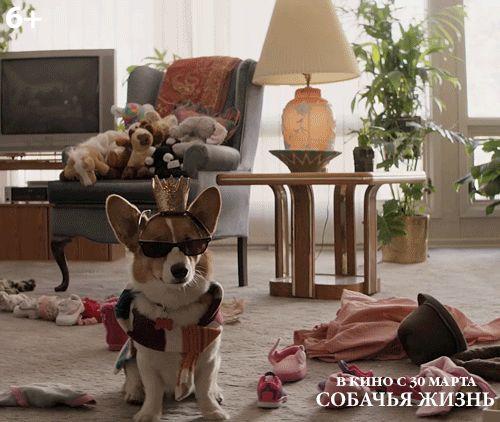 Собаки, как истинные друзья, безропотно терпят любые наши эксперименты… СОБАЧЬЯ ЖИЗНЬ В кино с 30 марта