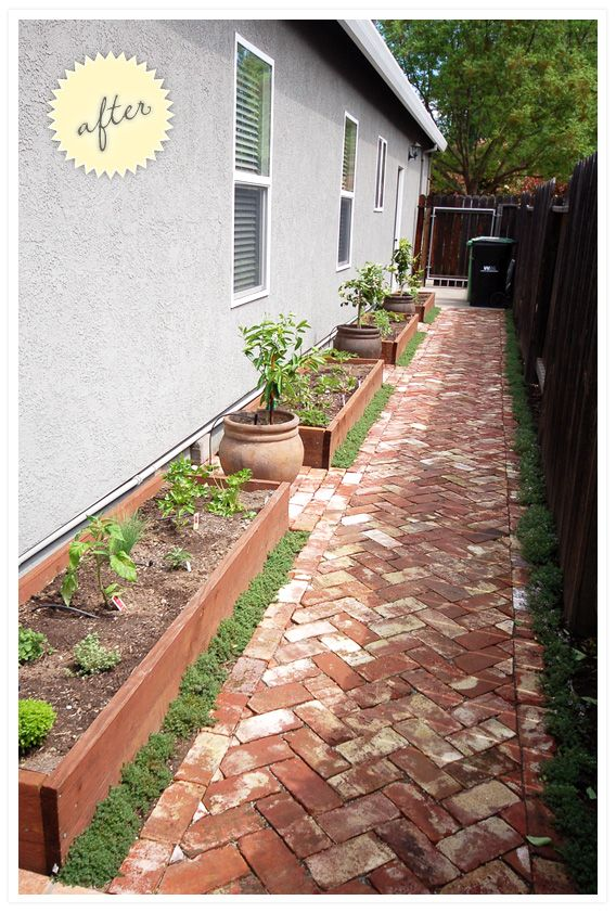 Side yard! Herringbone brick (salvage) raised vegetable beds, potted citrus, creeping ground cover. I love how it came out!