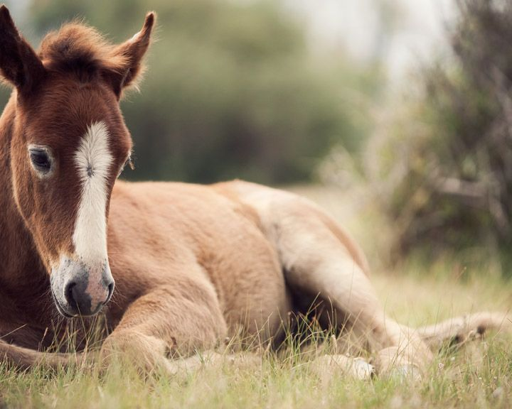 cute baby foals - photo #37