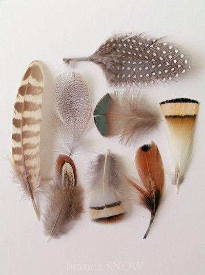 petitcabinetdecuriosites:    (via Collections / feathers ~ Bianca Snow)