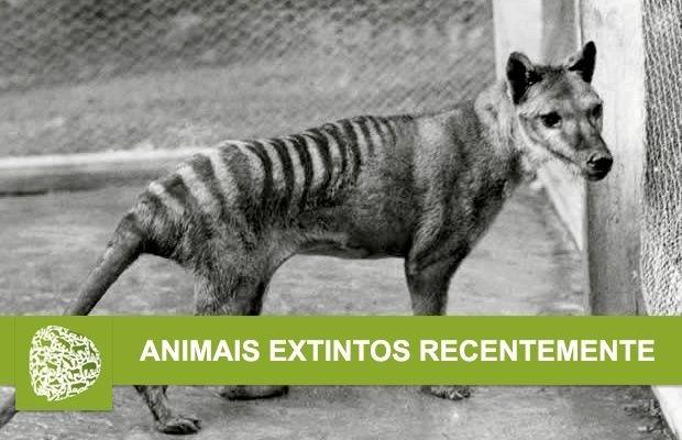 Animais Extintos Recentemente