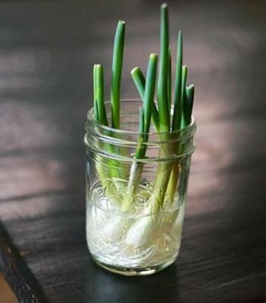 7 verdure che possono essere coltivate a partire dagli scarti (e non solo)