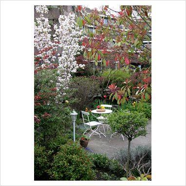 Small garden with Prunus 'Amanogawa',