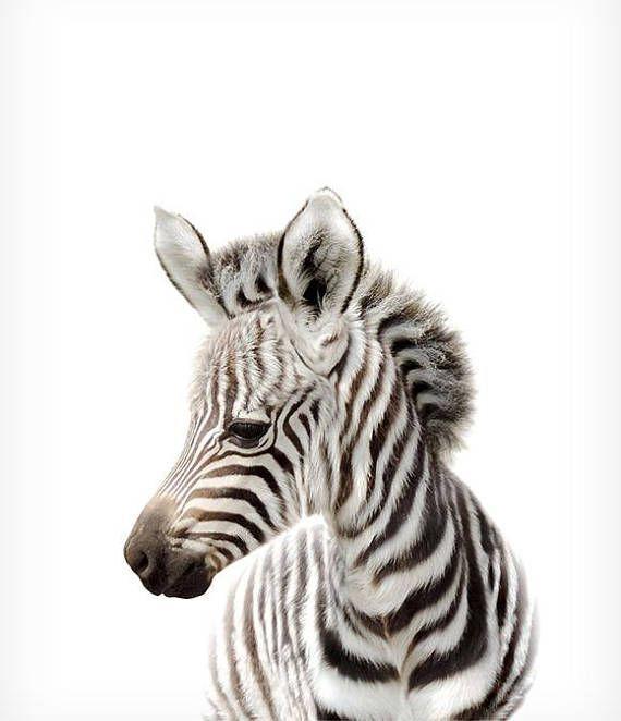 Safari Kinderzimmer Dekor Zebra Print druckbare Art Safari