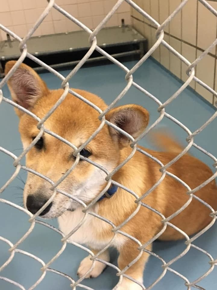 Adopt Teddy I1902 On Dog Adoption Help Homeless Pets Homeless Pets