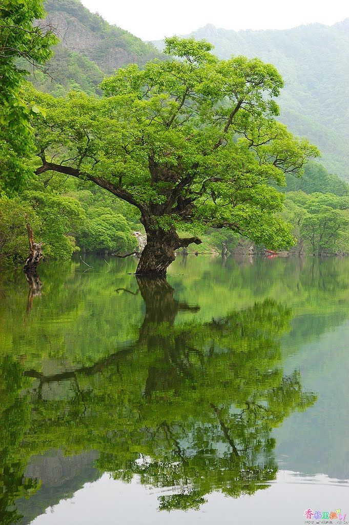 Best South Korea Images On Pinterest Asia Beautiful And Flowers - The beauty of south korea captured in stunning reflective landscape photography