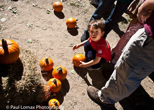 THE HARVEST FESTIVAL IN PICTURES