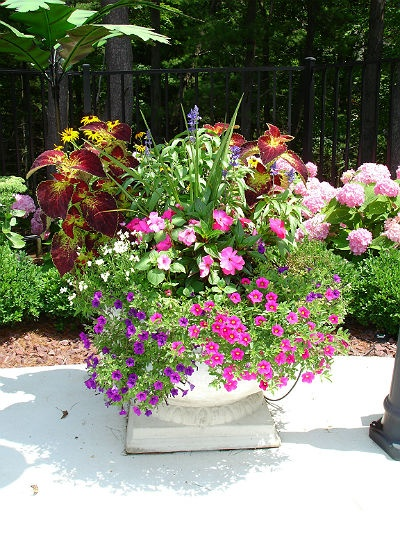 Permanent Flower Garden : Annual flower pots add color without creating permanent