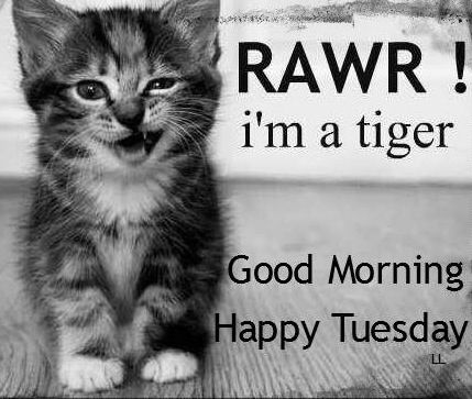 Happy Tuesday! via Living Life at www.Facebook.com/KimmberlyFox.39
