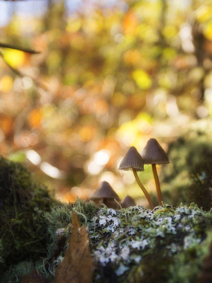 Setas en el bosque. by Josemigueldiazcorrales