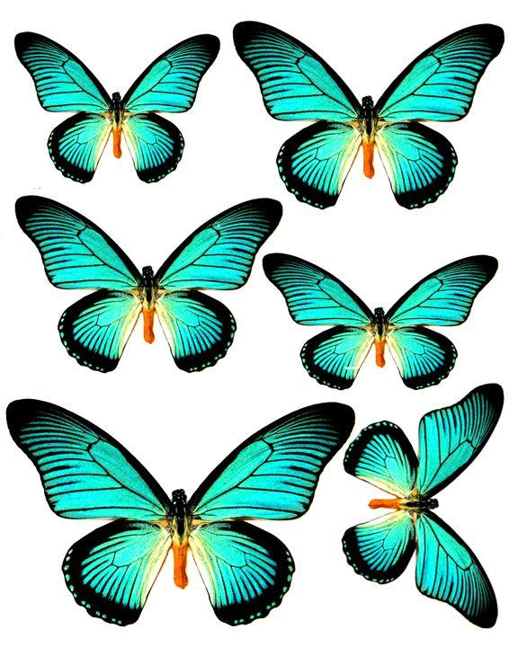 Foros / Imágenes y Gráficos / Mariposas - Swirlydoos Mensual Scrapbook Kit del club
