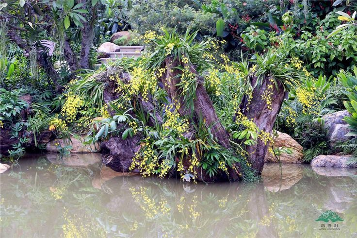 Orchid garden of Qingxiu Mountain in Nanning, guangxi, China