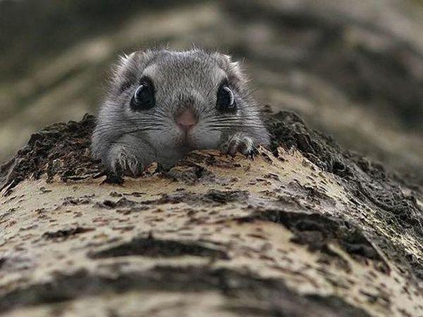 Cute Little Peek-a-Boo Squirrel