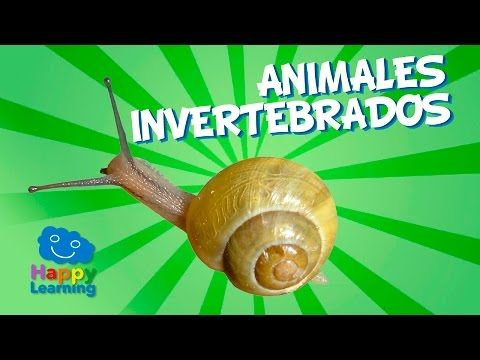 Animales Invertebrados para Niños | Bits de inteligencia + Lectura (invertebrate animals in spanish) - YouTube