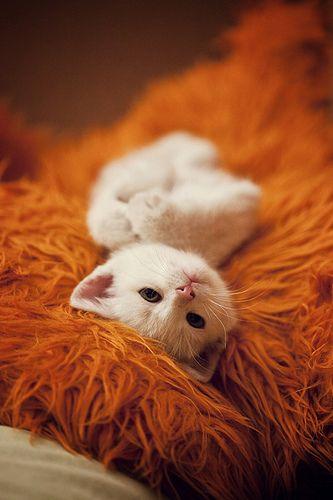 lil kitty