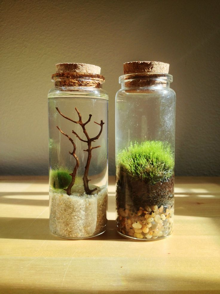 48 Best Terrarium Party Images On Pinterest Terrariums