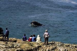 10. Responsible Tourism  In SA you can travel with care as you explore our protected areas, contribute to social and conservation projects, buy recycle art and stay green.      Here are traveller Whale watching at the Hermanus Whale Festival.
