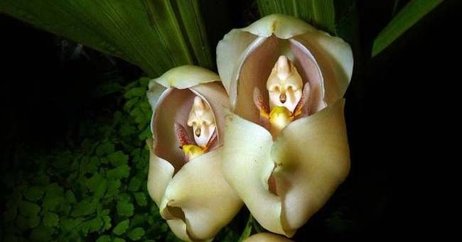Swaddled Babies: 23 Rare Flowers That Look Almost Nothing Like Flowers. #3 Is Slightly Horrifying