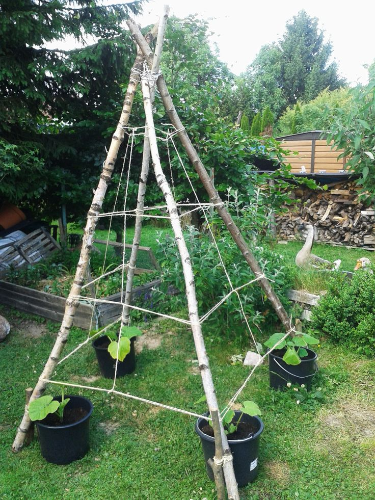 Kürbis Tipi aus Birken Stämmen Rankhilfe Rankgitter für Kürbis, Bohnen oder Blumen DIY Pumpkin Tepee rank help for Pumkin beans or flowers Made from birch trunks