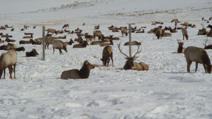 National Elk Refuge.  So fun to observe wildlife up close and personal!