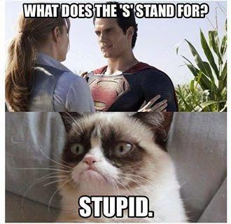 Grumpy Cat | From Judy Kelly - Google+ - LMAO- Twice!!