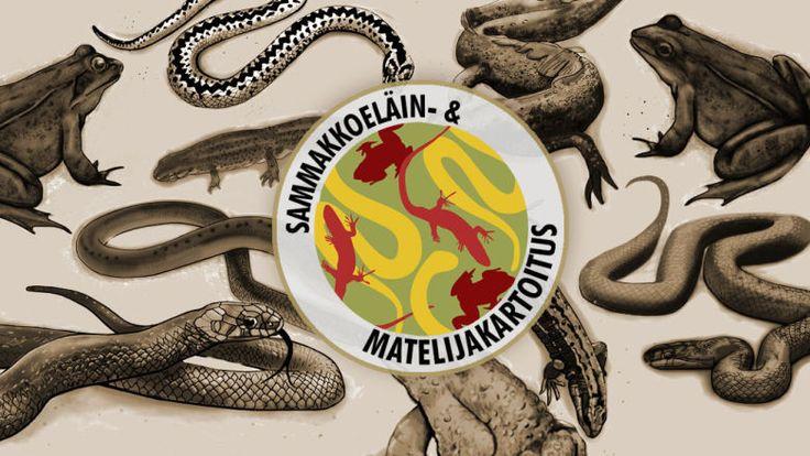 Anne Kimiläinen; sammakkoeläin -ja matelijakartoitus uusi logo