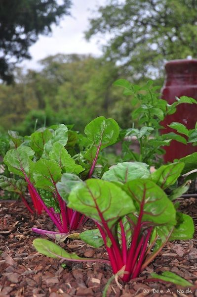 best 25 fall vegetable gardening ideas on pinterest winter vegetable gardening fall planting vegetables and organic gardening tips