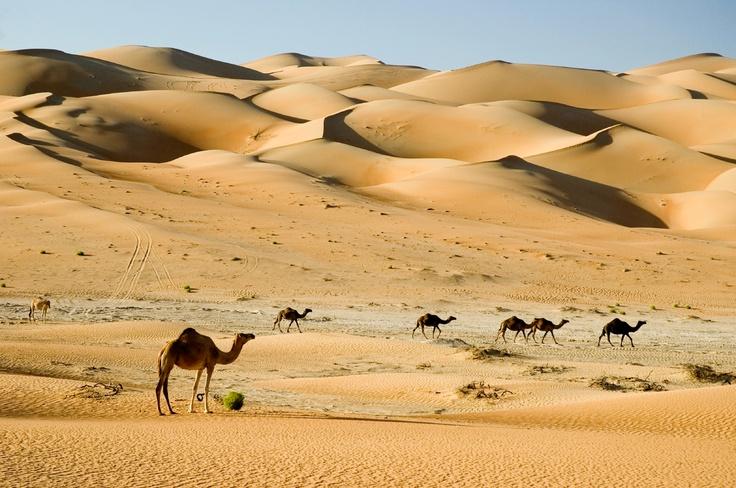 Something so serene about the dunes surrounding Dubai