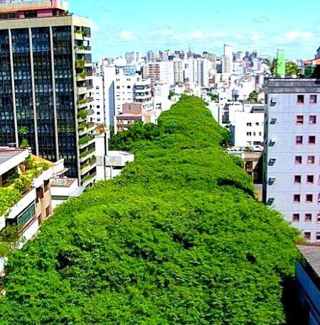 Гонсалу ди Ковалью — самая зеленая улица мира