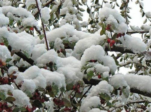 Snow on the Matroosberg.   Photo: Cordre Smith