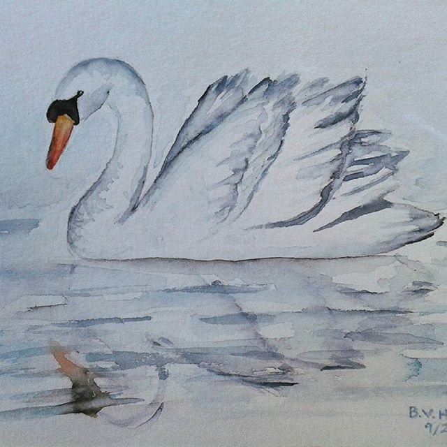 Why school when you can paint swans instead?  #watercolorpainting #illustration #swan