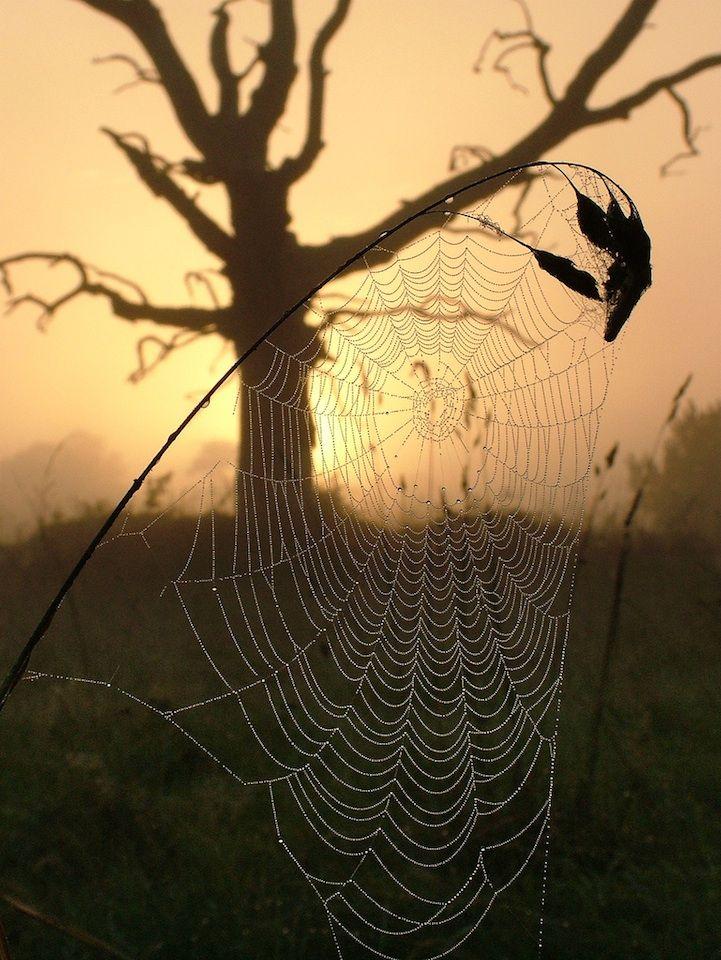 17 best images about arachnid lace on pinterest madagascar photo illustration and spider webs. Black Bedroom Furniture Sets. Home Design Ideas