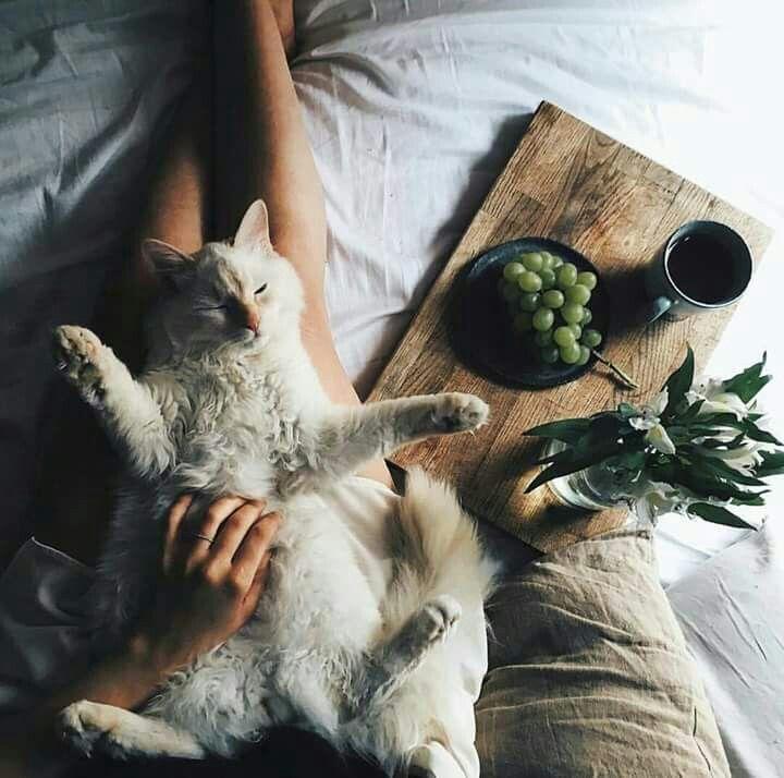 с добрым утром картинки с котом и гнездом на голове фиалка представляет собой