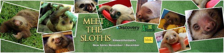 Sloth Sancturay in Costa Rica