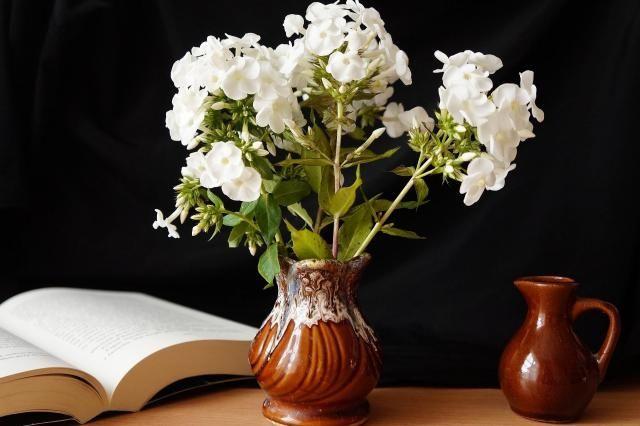 Co Twoje ulubione rośliny mówią o Tobie? #kwiaty #roslny #roslinydoniczkowe