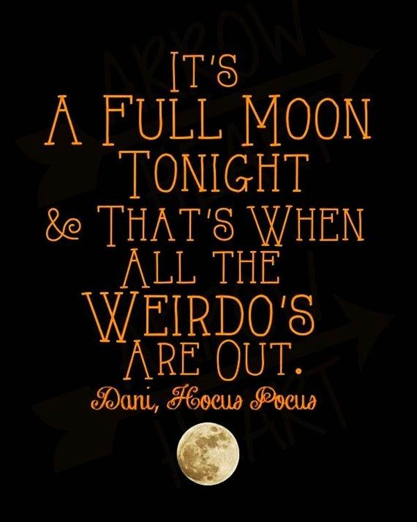 Halloween Funny Quotes   Google Search