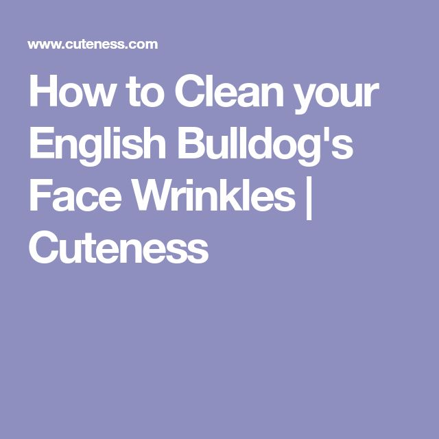 How to Clean your English Bulldog's Face Wrinkles | Cuteness
