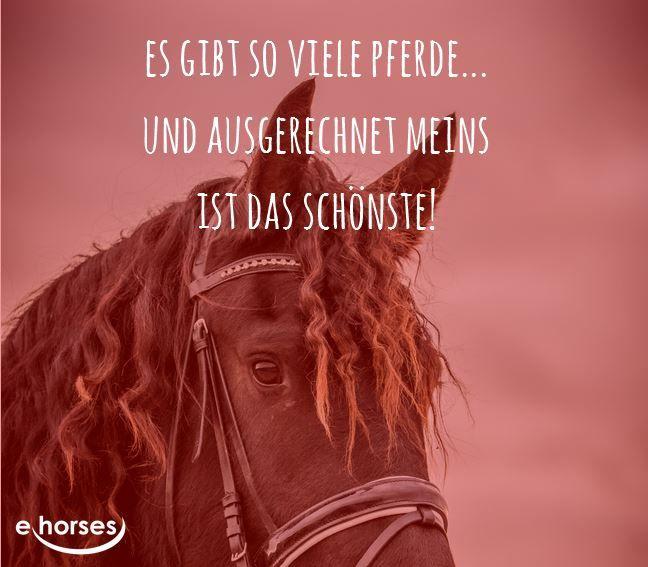 Bildergebnis Für Zitate Pferd