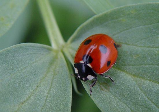 17 Best Images About Natural Pest Garden Potions Et