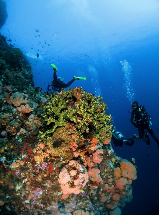 A wide variety of hard-coral can also be found in the depths of Komodo Island's diving site. Photo by Raditya Kosasih.