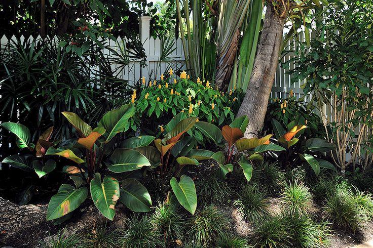 Rhapis palm, Pachystachys lutea, Ravenala madagascariensis, plumeria pudica, Philodendron sp. and mondo grass.