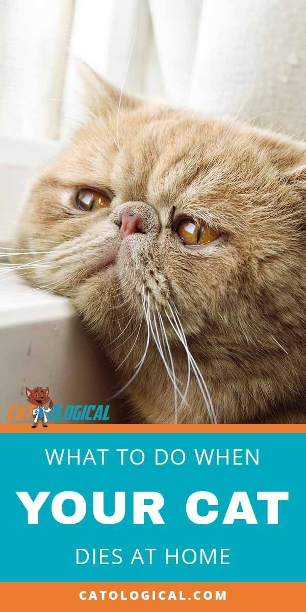 If your cat died at home you probably need to know what ...