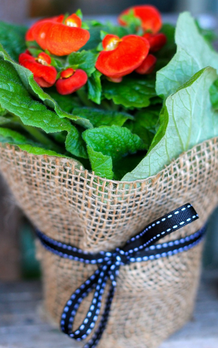 Wrap pot plants in burlap sacks and tie with a ribbon.